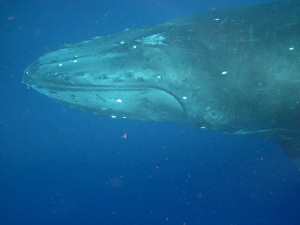 3 Ways to Hear the Whale Song First Hand…